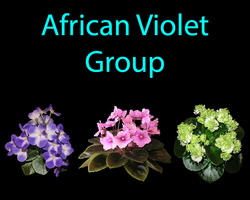 African Violet Group
