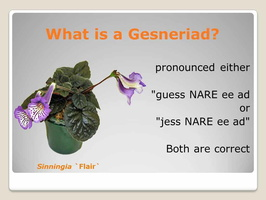 What is a Gesneriad
